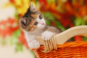 amy-petshop_kitty
